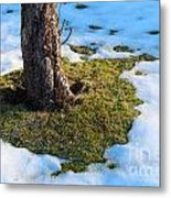 Melting Snow On Lawn Metal Print