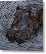 Menacing Hippo Metal Print