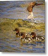 Merganser Lake Tahoe Metal Print