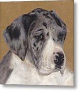 Merle Great Dane Puppy Metal Print