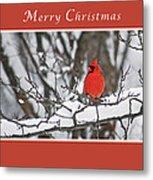 Merry Christmas Male Cardinal Metal Print