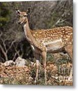 Mesopotamian Fallow Deer 2 Metal Print