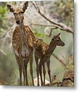 Mesopotamian Fallow Deer 4 Metal Print