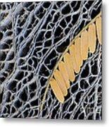 Mesquite Leaves Metal Print