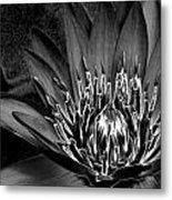 Metal Lotus Metal Print