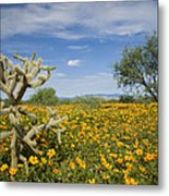 Mexican Golden Poppy Flowers And Cactus Metal Print
