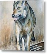 Mexican Grey Wolf Metal Print