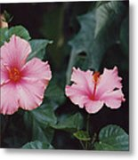 Mexico Pink Beauties By Tom Ray Metal Print