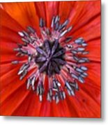 #mgmarts #nature #poppies #poppy Metal Print