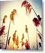 #mgmarts #sunset #bright #beautiful Metal Print