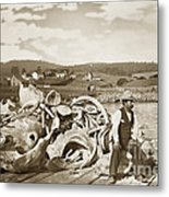 Michael Noon Sitting On A  Pile Of Whale Bones Monterey Wharf  Circa 1896 Metal Print