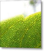 Micro Leaf Metal Print