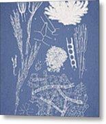 Microdyctyon And Cladophora Metal Print