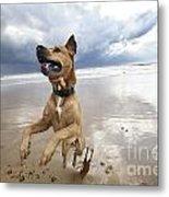 Mid-air Beach Dog Metal Print by Eldad Carin