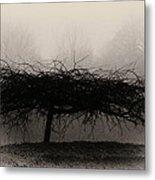 Middlethorpe Tree In Fog Sepia - Award Winning Photograph Metal Print