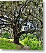 Middleton Place Oak  Metal Print