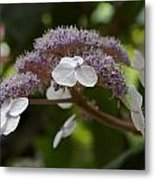 Midsummer Bloom Metal Print by Christine Burdine