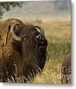Mighty Bison Metal Print