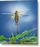 Migratory Locust Flying Metal Print