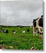 Milk Nature Nose Metal Print