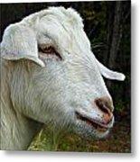 Milkshakes The Goat Metal Print
