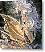 Milkweed II Metal Print