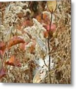 Milkweed In Autumn Metal Print