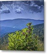 Milkweed Plants Along The Blue Ridge Parkway Metal Print