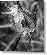 Milkweed Pod Monochrome Metal Print