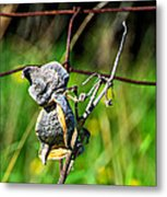 Milkweed Retirement  Metal Print