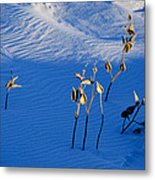Milkweeds In The Snow Metal Print