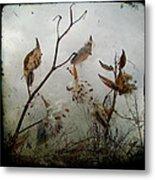 Milky Milkweed Metal Print