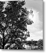 Mill Creek Marsh Afternoon Sun Metal Print