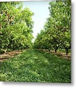 Millions Of Peaches Metal Print