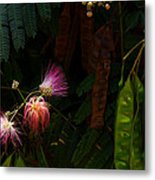 Mimosa And Peppervine Metal Print