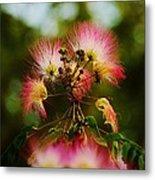 Mimosa Blooms Metal Print