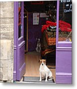 Minding The Shop. Two French Dogs In Boutique Metal Print by Menega Sabidussi
