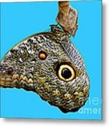 Mindo Butterfly Metal Print by Al Bourassa