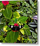 Mindo Butterfly At Rest Metal Print by Al Bourassa