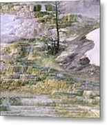 Minerva Springs Terraces Yellowstone National Park Metal Print