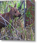Mini Moose Metal Print