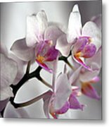 Mini Orchids 1 Metal Print