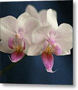 Mini Orchids 2 Metal Print