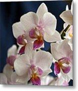 Mini Orchids 3 Metal Print