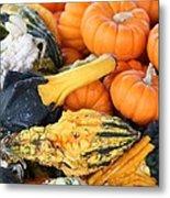 Mini Pumpkins And Gourds Metal Print