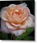 Mini Rose Metal Print
