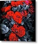 Mini Roses On Walk Metal Print