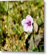 Mini Wild Flower Metal Print