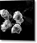 Miniature Roses Black And White Metal Print