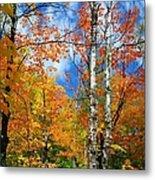 Minnesota Autumn Foliage Metal Print